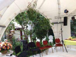 Fête arbre fleurs chaises